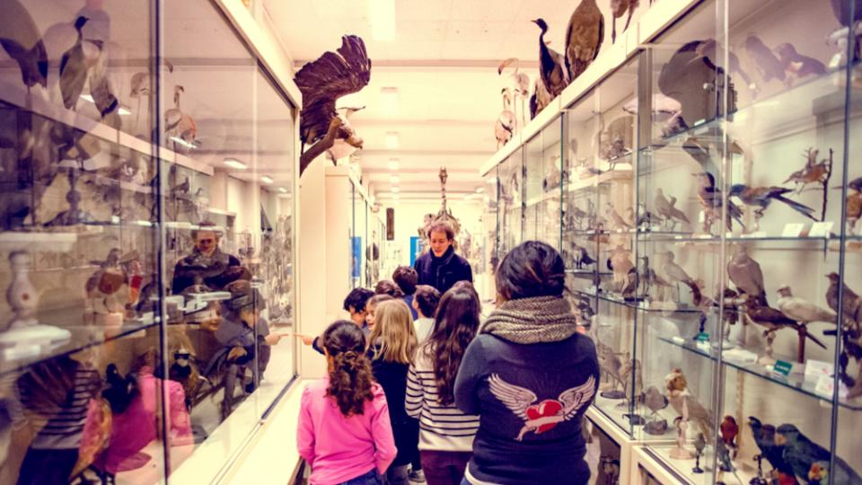 Visite de la collection de zoologie